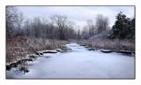 070120_Wetland.jpg