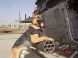 David Ortiz  & Rex  (Air Assault) - 2