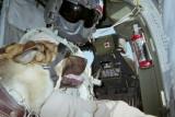 David Ortiz -  Rex with Doggles - 1