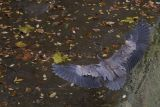 Heron 2.jpg