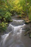Plum Creek.jpg