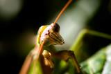 Praying-Mantis-3.jpg