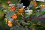 Dewey Flowers *.jpg