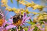 Dewey Bee *.jpg