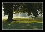 L'aube dans le parc