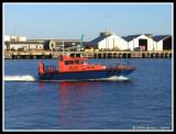 Osprey, Inner Harbour