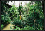 Jungle Setting