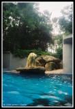 Polar Bear on all fours