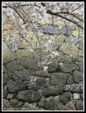 The Sakura and the Old Stone Wall