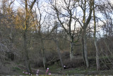 Denburn Wood Crail