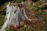 Stump ¹tor_MG_1991-2.jpg