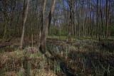Floodplain forest poplavni gozd_MG_0873-1.jpg