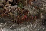 Stump ¹tor_MG_2328-1.jpg