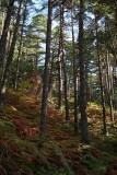 pine forest borov gozd_MG_3188-1.jpg