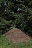 Anthill  Formica rufa mravljii¹èe_MG_2983-1.jpg