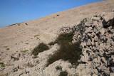 Stone fence kamnita ograja_MG_5187-1.jpg