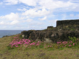 November is springtime on Rapa Nui, and flowers bloomed everywhere.....