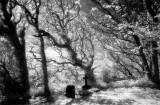 spirits in the churchyard