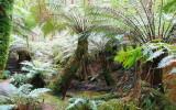 Soft Tree Ferns.jpg