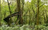 Rainforest3.jpg