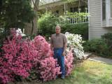 Front yard azaleas