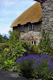 Thatch and flowers, Bossington