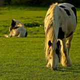 Horse and foal, Martock (D80)