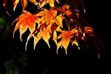 Brilliant leaves! Stourhead (D80)
