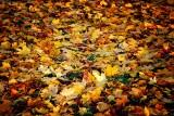 Leaves, Wells