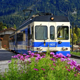 Train and flowers, Les Diablerets