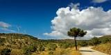 Tree and turbines, Sierra de Aquas