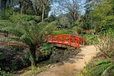 Red bridges, Abbotsbury Gardens (2369)