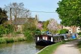 Towpath and cherry trees, Bradford on Avon