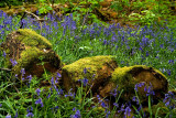 Logs'n'bluebells