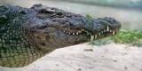 One a'croc