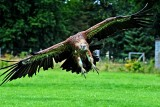 Vulture banking