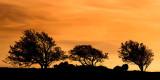 Tree line silhouette, Exmoor (2245)