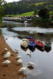 Swans and boats, Totnes