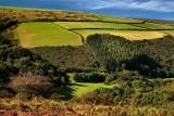 Exmoor fieldscape