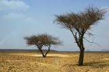 The desert of the nomads