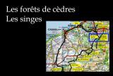 Forest in Atlas