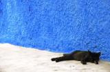 Un chat paisaible