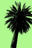 palm on green