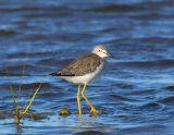 _JFF2382 Yellow Legs on Grass Point.jpg