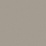 grayish background.jpg