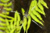 Spider at Lunch