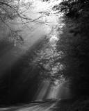 Light  - black & white