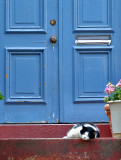 Doorway cat