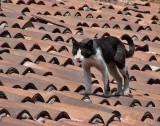 Covered Bazaar roof dweller