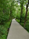 Swamp trail, Roosevelt Island